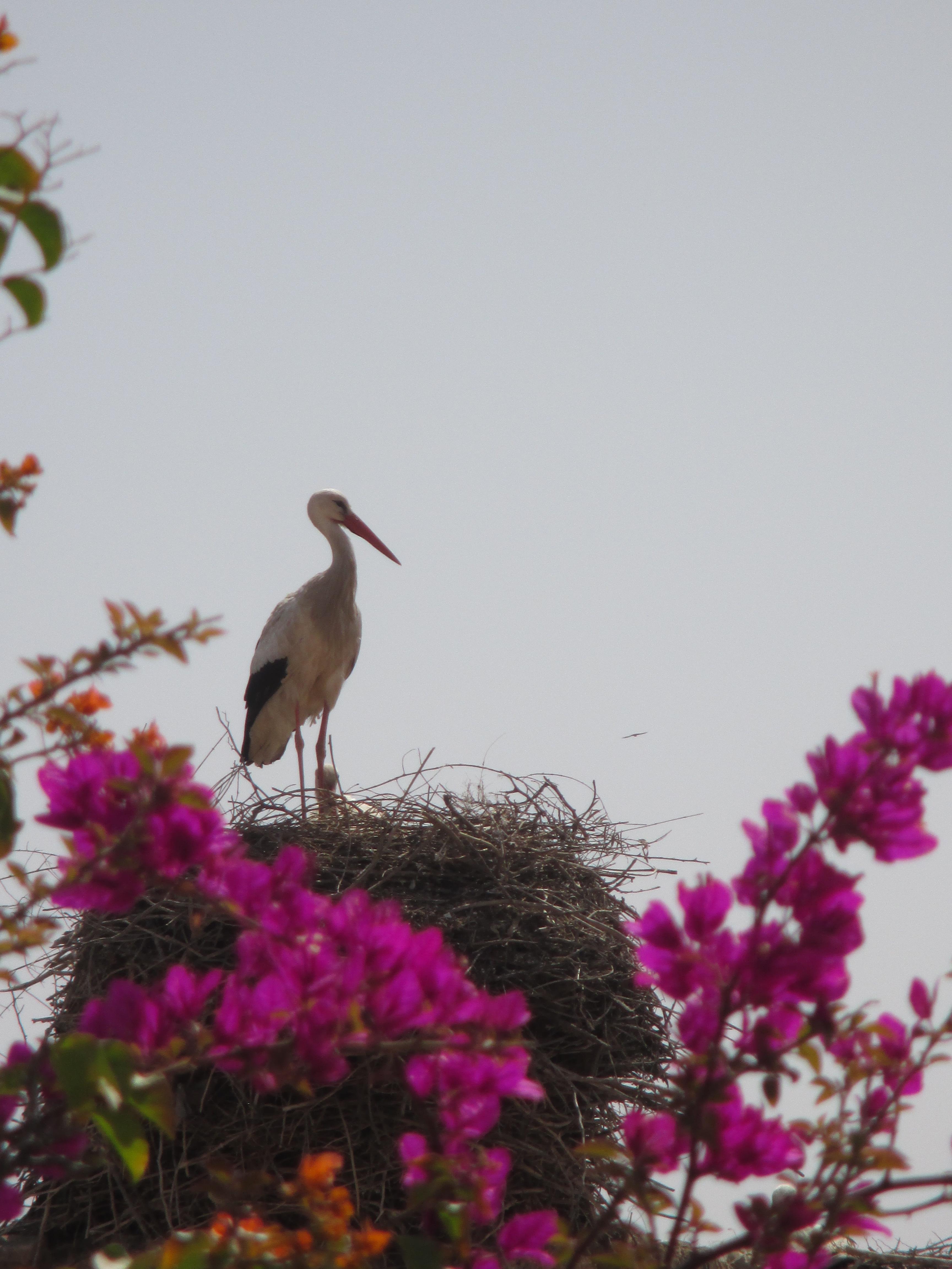 Storch, El Badi Palast