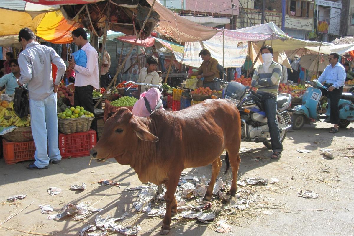 Udaipur, Markt