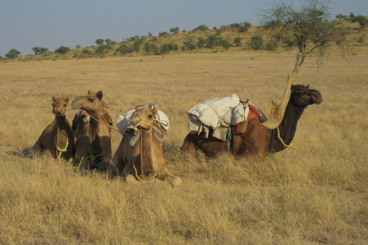 Umsteigen aufs Kamel