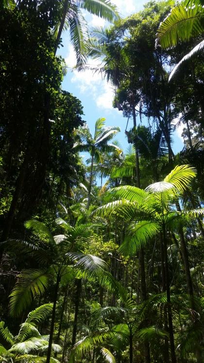Regenwald an der Central Station auf Fraser Island
