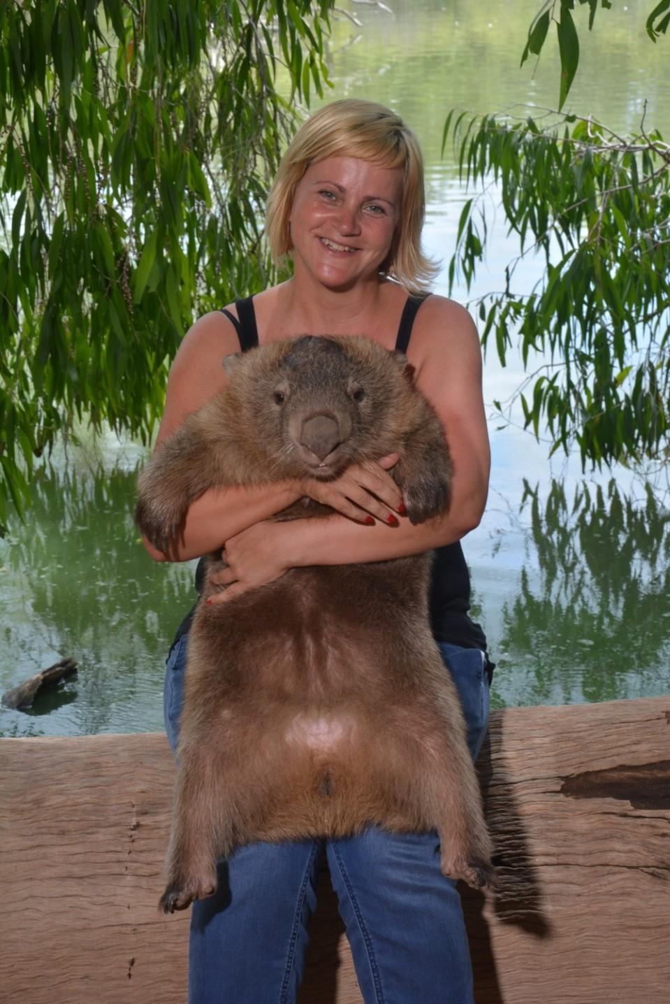 Wombat Tonka