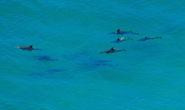 Delfine Byron Bay